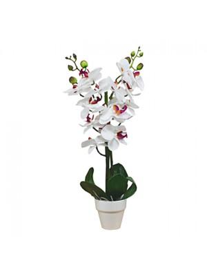 Орхидея в саксия