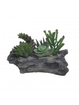 Кактуси в дървена кашпа